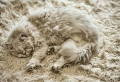 Der Shaggy Teppich: eine echte Attraktion im Zimmer!