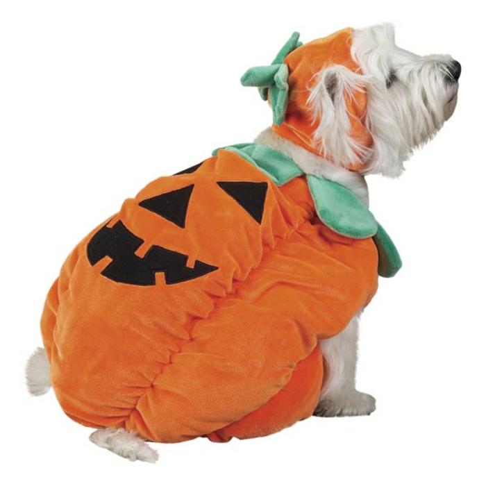 tolles-kürbis-ein-hund