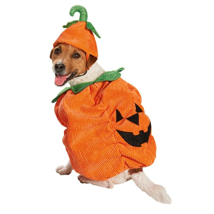 tolles-kürbis-wunderschöner-hund