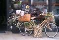 Das Bambus Fahrrad – Zukunft im Überblick