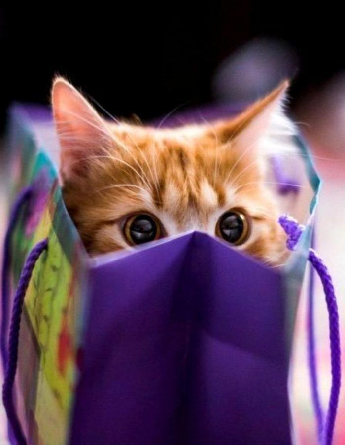 Überraschung-neugierige-Katze-als-Geschenk