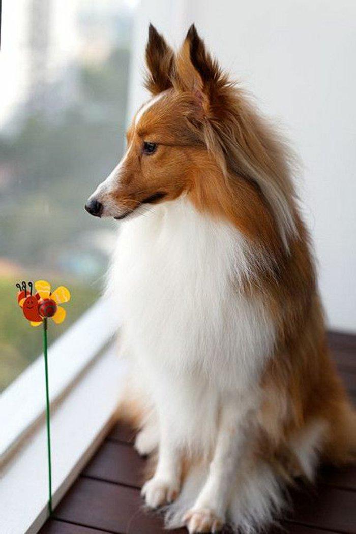 Die S 252 223 Esten Bilder Von Hunden