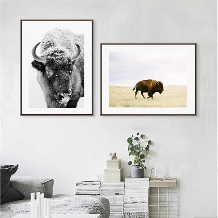 Zwei gerahmte Fotografien von Bisons, schwarz weiß und farbig, Wandbilder Wohnzimmer, weiße Wand