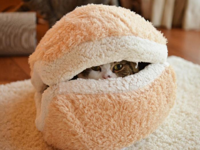 katzen zubehör -kleine-katze-versteckt