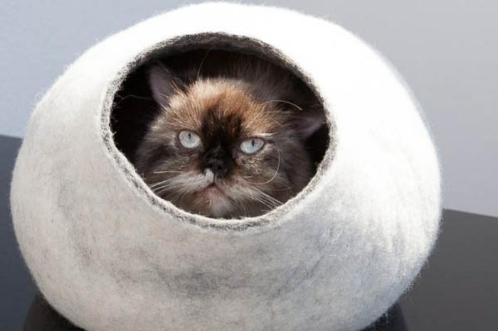katzen zubehör-neugierige-katze