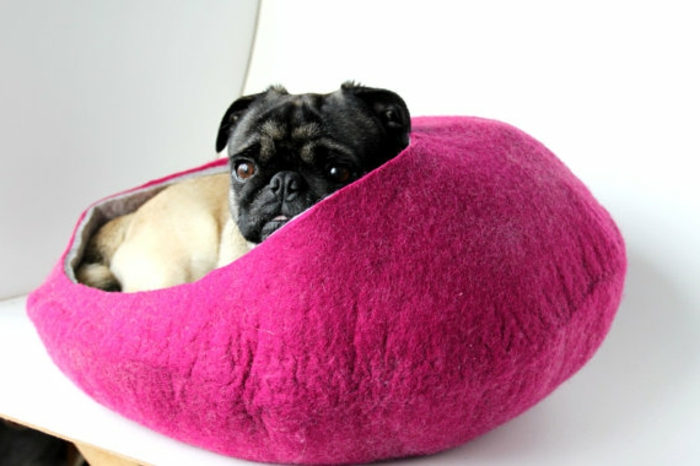 katzenzubehör-und-klein-hund