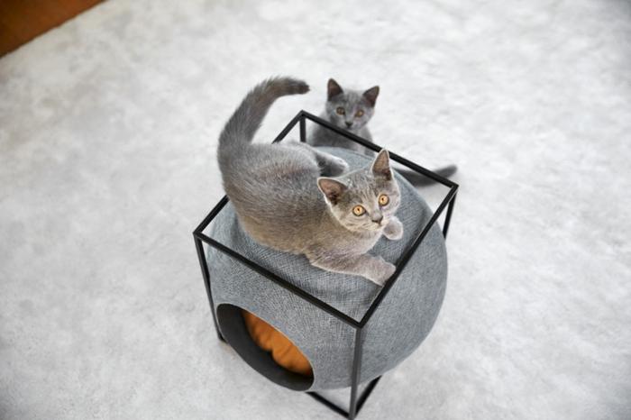 katzen zubehör -zwei-graue-katzen