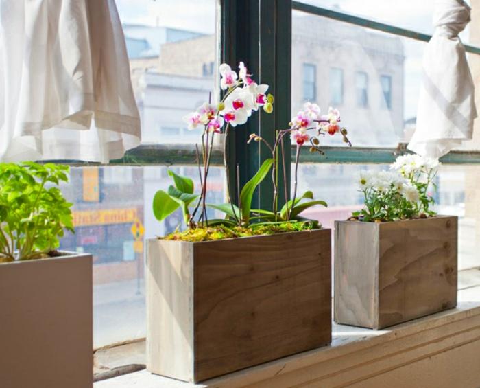 pflanzkübel-holz-orchideen