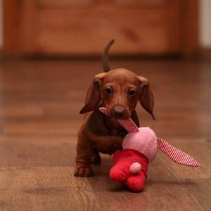 Die süßesten Bilder von Hunden!