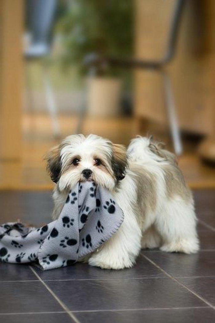 die suessesten bilder von hunden archzinenet