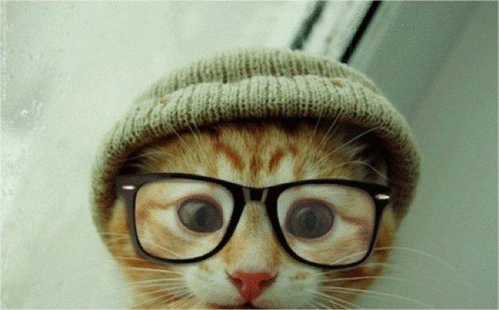 süßes-Kätzchen-hornbrille-gestrickter-Hut-hipster-style-lustiges-Foto