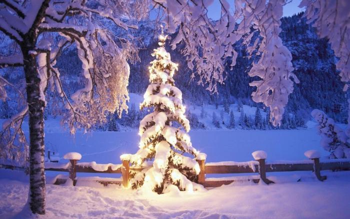 weihnachtsbaum-mit-beleuchtung-außen-beleuchtung
