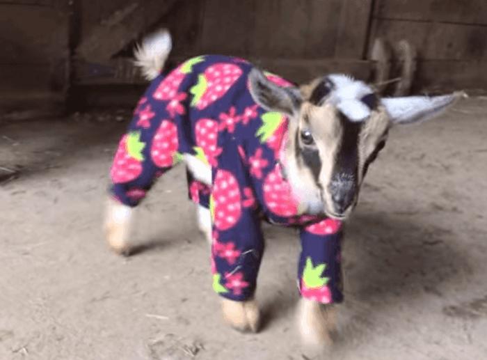 cooles-Modell-kinderpyjama-für-Zicklein-wunderschöne-süße-Idee