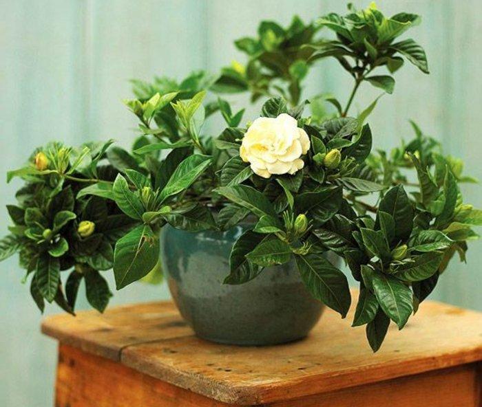 0-blühende-Zimmerpflanzen-für-eine-gemütliche-Atmosphäre