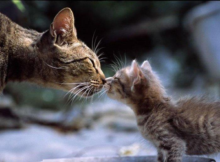 01-süße-Katzen-Kuss-süßes-Foto