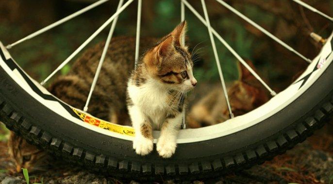 02-süßes-Katzen-Baby-Fahrrad-cooles-Foto-süße-Katzen