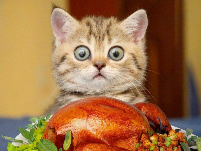 04-lustige-Katzenbilder-süße-Katzen-kleines-Kätzchen-vor-dem-Essen