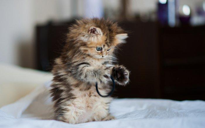 05-lustige-Katzenbilder-spielendes-Kätzchen