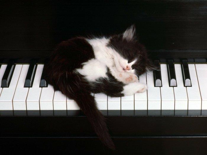 07-süße-Katzenbabys-auf-dem-Klavier-schlafendes-Kätzchen