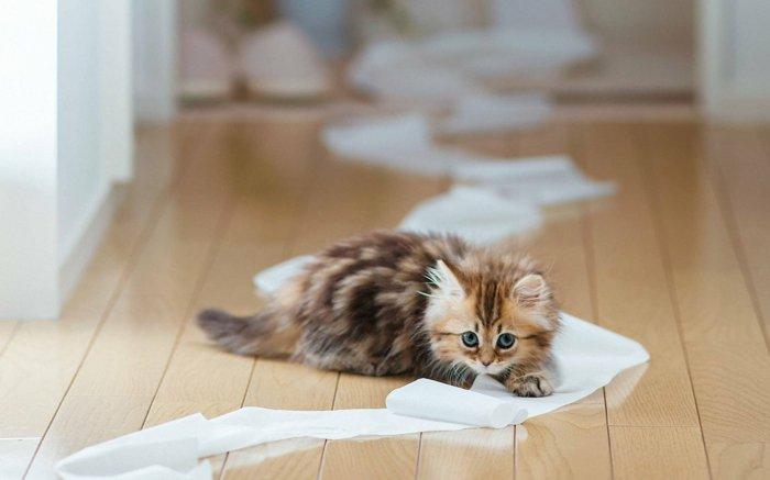 08-süße-Katzenbabys-spielendes-Kätzchen