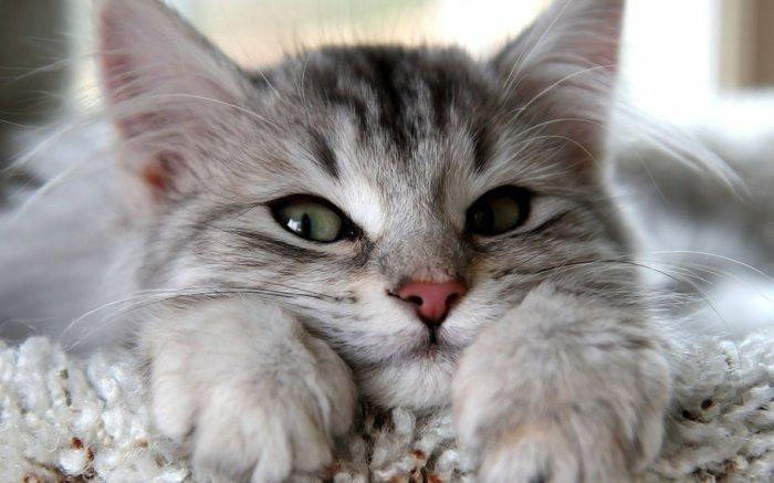 11-süße-Bilder-von-Babykatzen-Kätzchen-mit-schönen-grünen-Augen