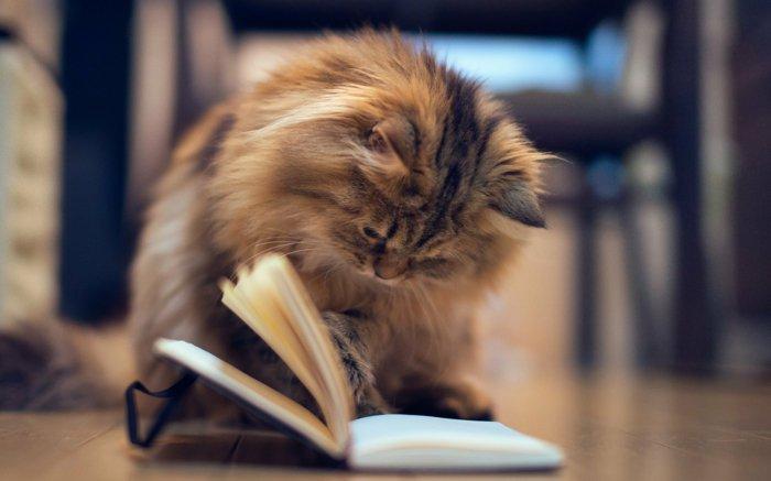 13-süße-Bilder-von-Babykatzen-Kätzchen-lesend-Buch