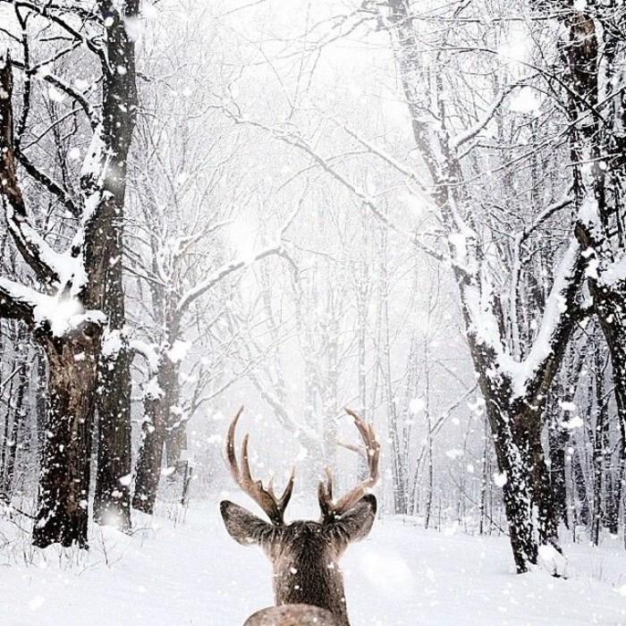 coole-Winterbilder-Bild-mit-Wintermotiven-Hirsch-im-Wald-Schnee