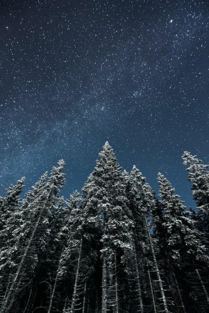 Bilder-Winterlandschaft-Finnland-großartige-Bäume