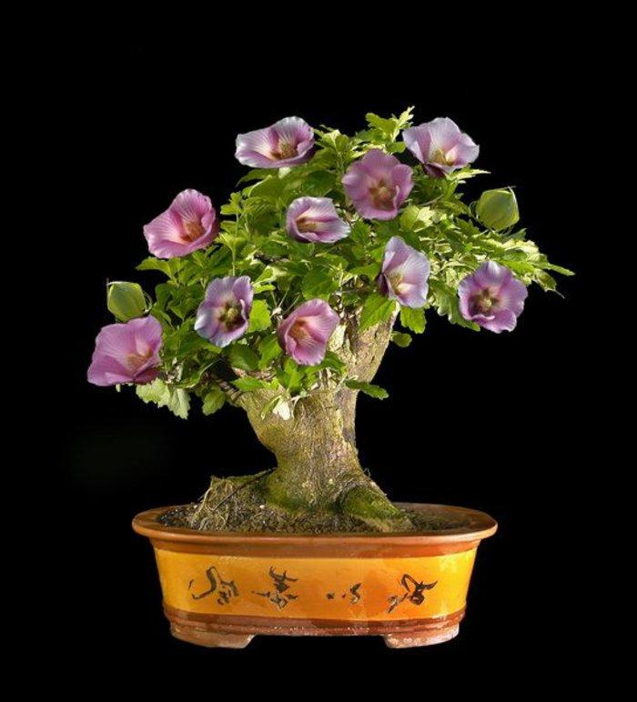 Bonsai-mit-herrlichen-lila-Blüten-für-zu-Hause