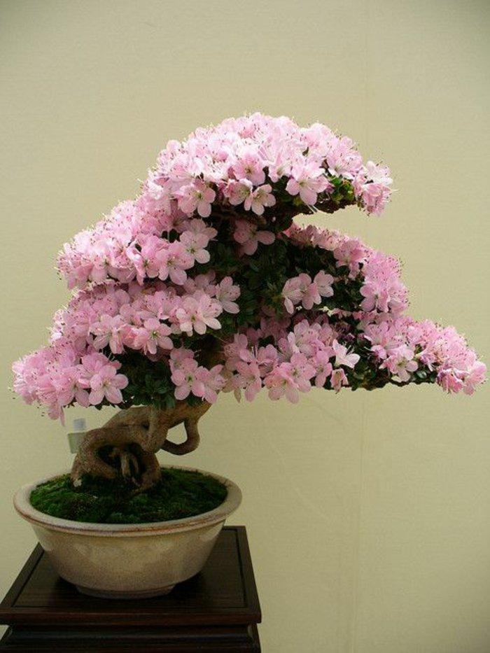 Bonsai-mit-zärtlichen-rosa-Blüten