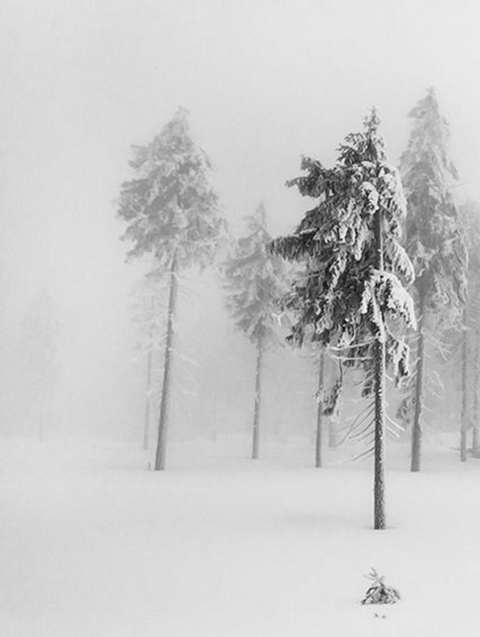 Foto-vom-Wald-im-Winter-Winterbild
