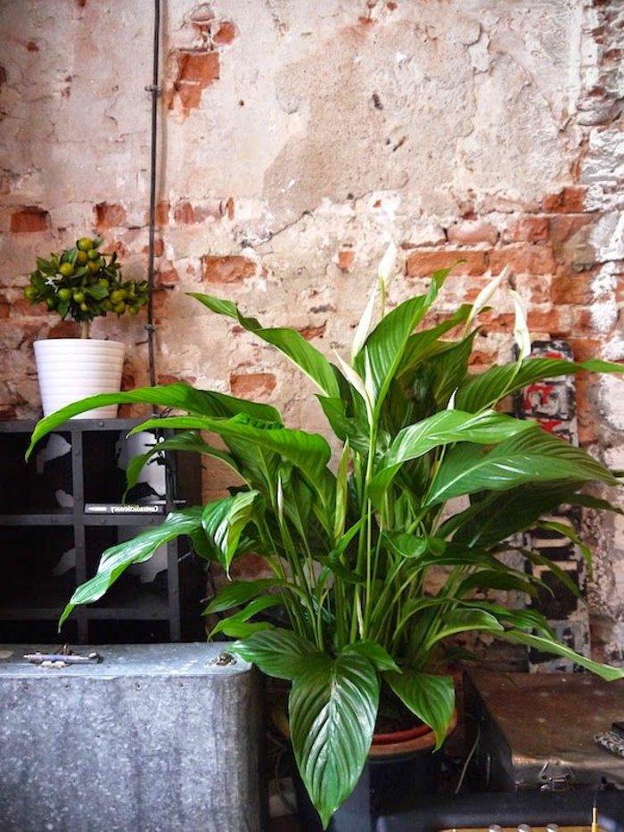 Grünpflanzen-mit-großen-Blättern-und-kleine-dekorative-Topfpflanzen