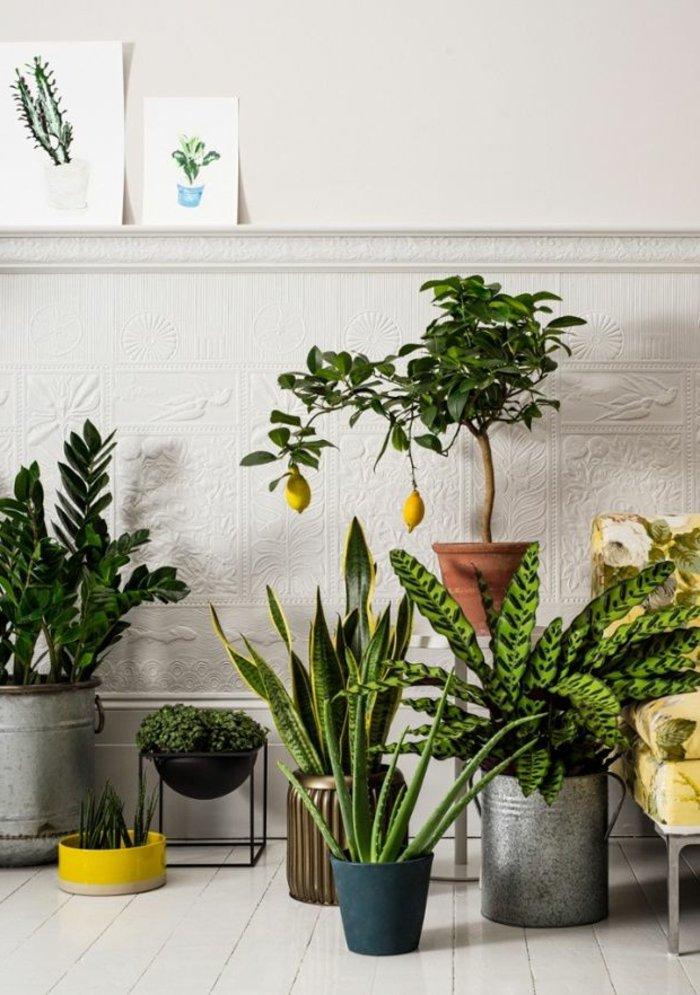 Haus-mit-vielen-Topfpflanzen-in-schöner-Komposition