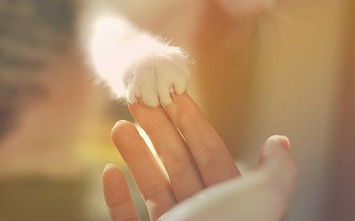 Katzenbabys-Bilder-Foto-von-süßer-weißen-Katzenpfote