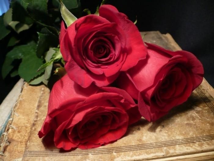 Rosenstrauss-schlicht-drei-rosen