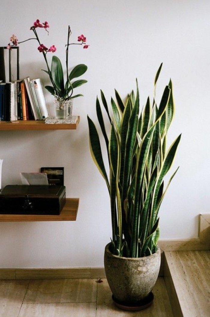 Topfpflanzen-und-Orchideen-in-Vase