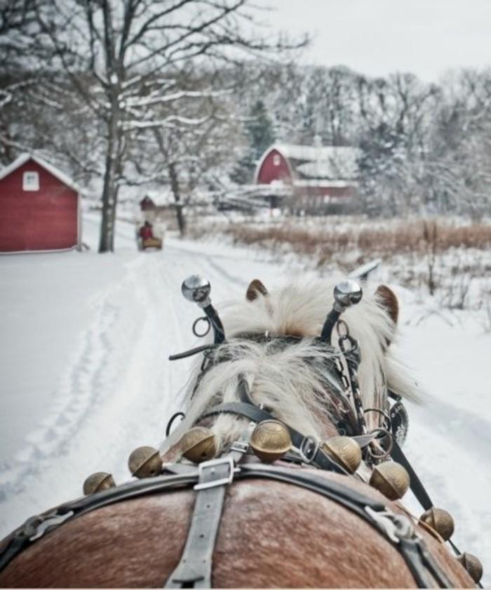 Winterbilder-Winterimpressionen-Pferd-durch-den-Schnee