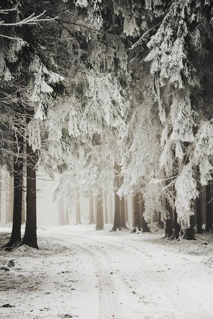 Winterimpression-romantische-Winterlandschaften-Bilder-Wald-Schnee