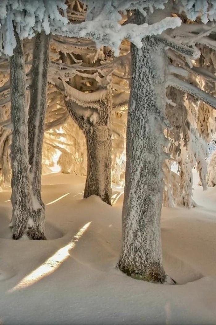 Winterlandschaft-Bilder-Bäume-bedeckt-mit-Schnee