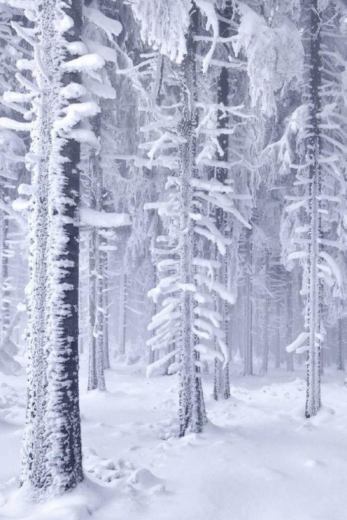 Winterlandschaft-Bilder-Fotografien-mit-Wintermotiven