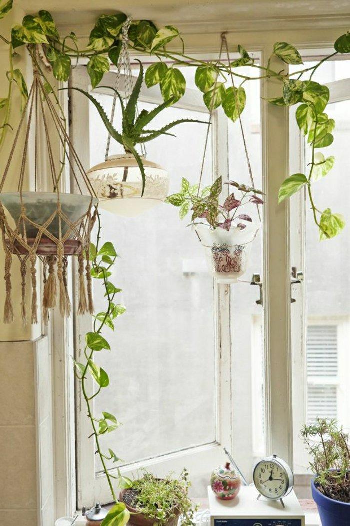 Zimmer-mit-vielen-attraktiven-Topfpflanzen