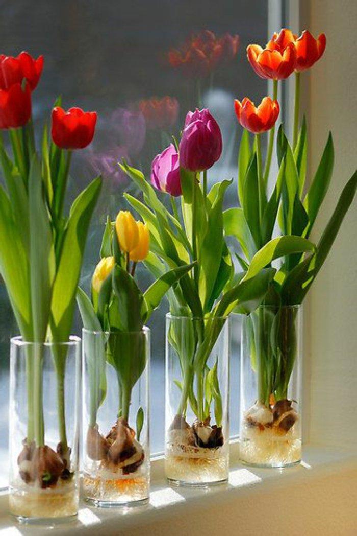 Zimmerblumen-pflanzen-schöne-vielfältige-Tulpen