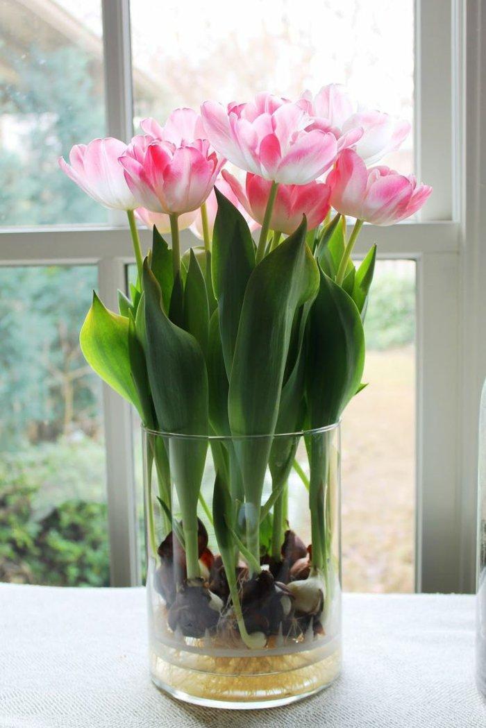 Zimmerblumen-pflanzen-zärtliche-rosa-Tulpen-in-schlichter-Vase