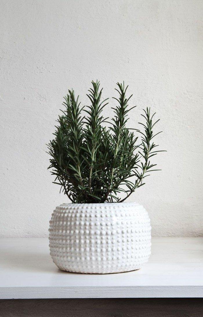 Zimmerpflanze-in-coolem-Modell-Pflanzentopf
