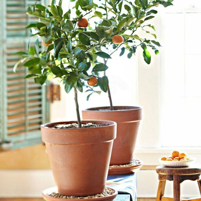 52 frische Ideen für Zimmerpflanzen Archzine