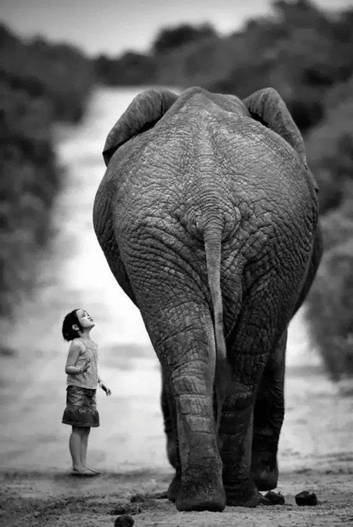 artistische-schwarz-weiße-Fotokunst-Elefant-und-kleines-Kind-Kontrast