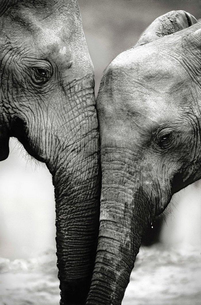artistische-schwarz-weiße-Kunstfotografie-zwei-Elefanten