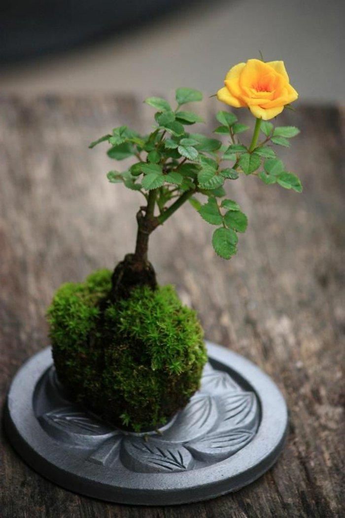 blühende-Zimmerpflanzen-herrliche-orange-Rose-fantastische-Komposition
