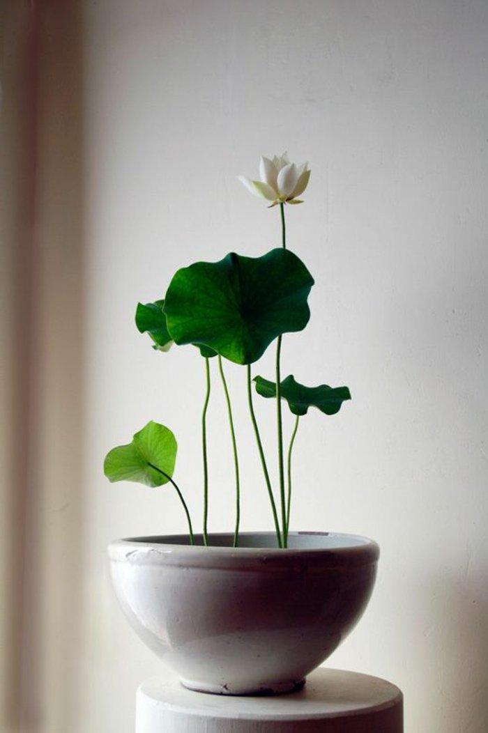 blühende-Zimmerpflanze-mit-weißen-Blüten