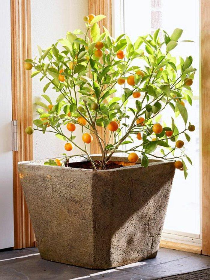 dekorativer-Orangenbaum-in-Pflanzentopf-für-ein-exotisches-Interieur